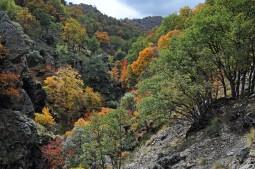 Bosque del camarate